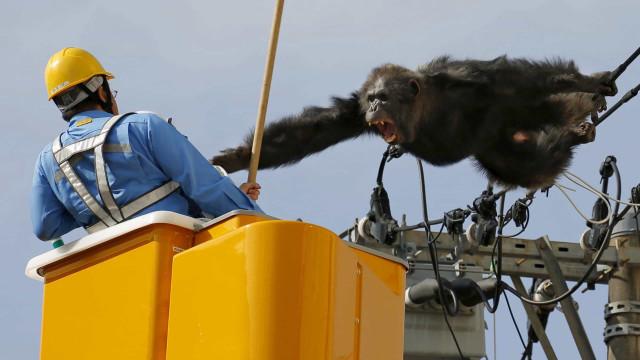 Zoo: las huidas más grandiosas de la historia
