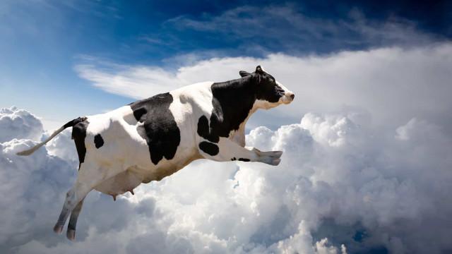 Coisas estranhas que caíram do céu: de vaca à chuva de sangue!