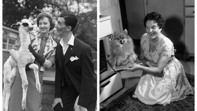 Tierliebe: Historische Fotos von Menschen mit tierischen Freunden