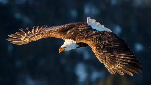 Beeldschoon: vogels in vogelvlucht