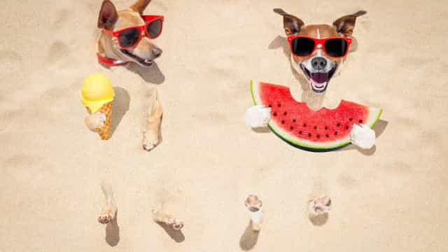 These adorable animals know how to beat the heat!