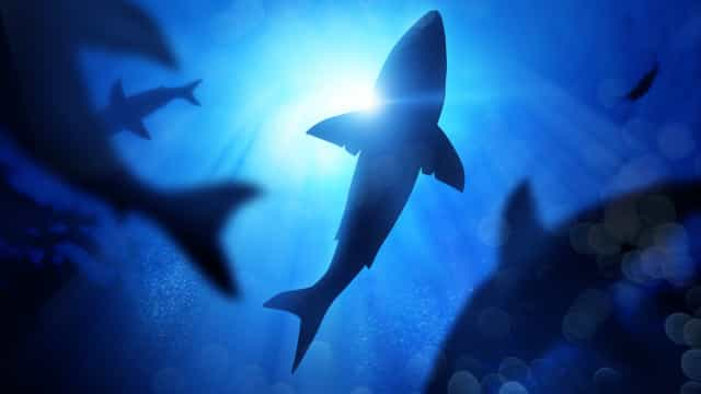 Dive in: 5 surprising 'Shark Week' facts to bite into