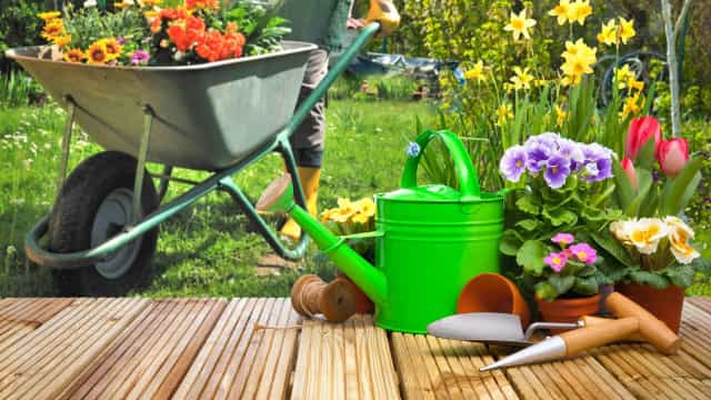 How to keep your garden healthy in the heatwave