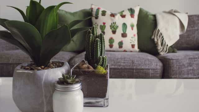 Home decor: plant inspo to green up your space