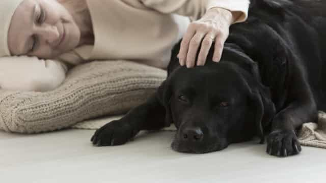Therapy animals: touching moments of animals helping humans heal