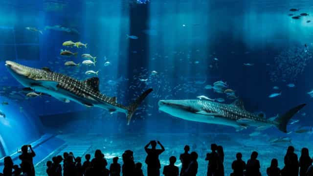 The world's most spectacular aquariums
