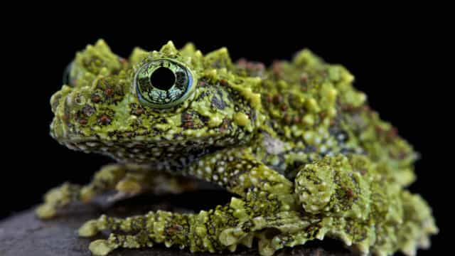 Hop on: discover some of the world's most colorful and curious-looking frogs