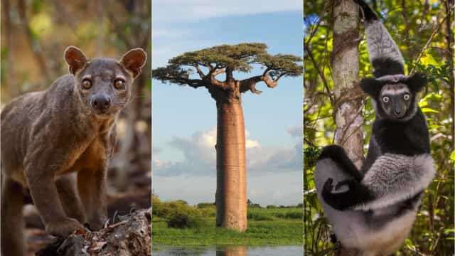 Why Madagascar is Africa's best kept secret