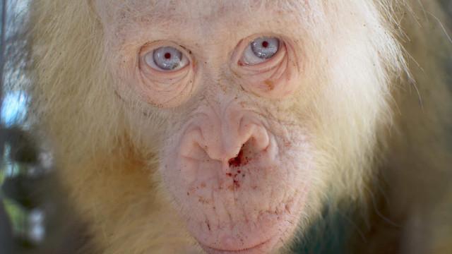 Albiinoeläimet todistavat, että kauneutta on monenlaista