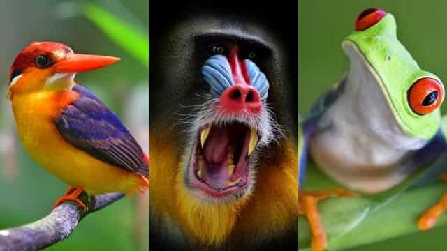 Marvel at the most radiant wildlife on Earth