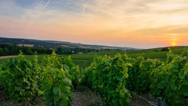 La Bourgogne, entre paysages bucoliques et terroir d'exception