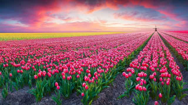 Stunning pictures of spring to celebrate its arrival