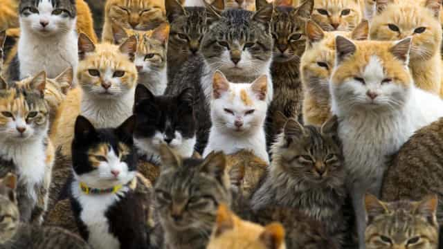 Celebrate International Cat Day on this surreal Japanese island