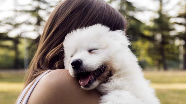 Salaiset tavat, joilla koirat kommunikoivat omistajiensa kanssa