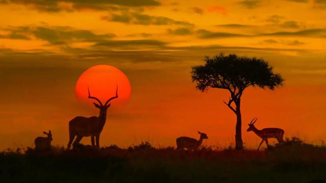 Peek inside Earth's best destinations to see wildlife