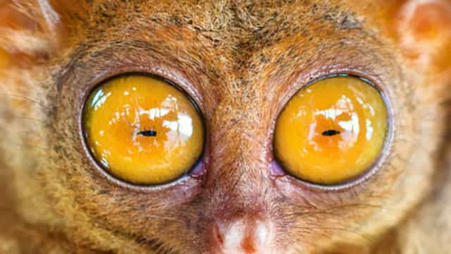 Who's got the most amazing eyes in the animal kingdom?