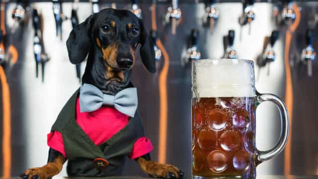 You can now drink beer with your dog