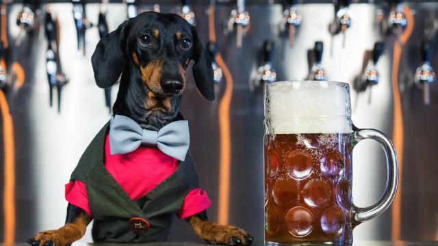 Ab sofort gibt es Bier für Hunde