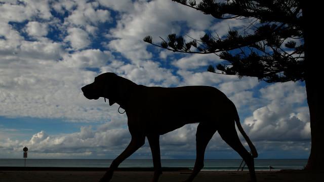 Australia's deadliest animals are surprisingly ordinary
