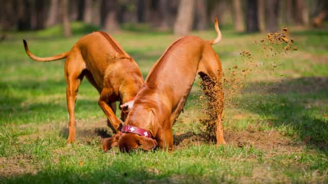 The secret to getting your dog to stop digging holes