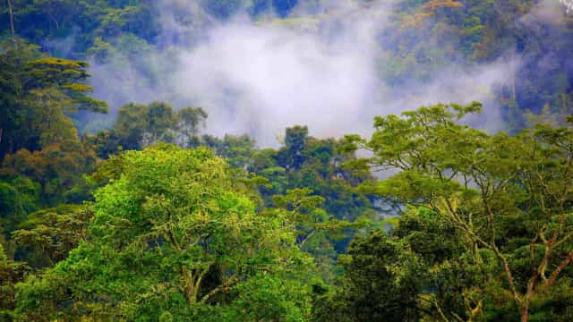 Be amazed by these stunning jungle and rainforest destinations