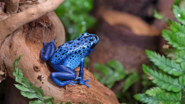 Vibrant blue animals you can't take your eyes off of