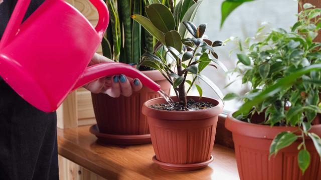 Come mantenere in vita le tue piante mentre sei in vacanza