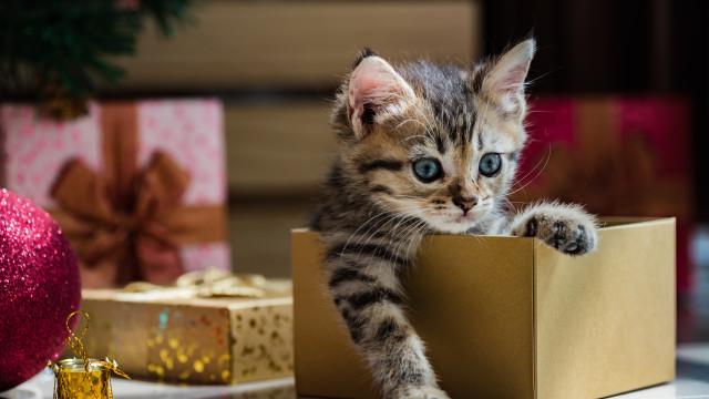 Perché non si dovrebbero mai regalare animali domestici?