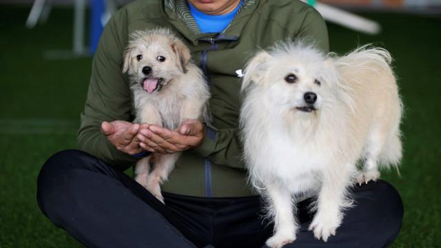 Kiinan lemmikit ovat vasta alkua: kloonaus on yleistymässä