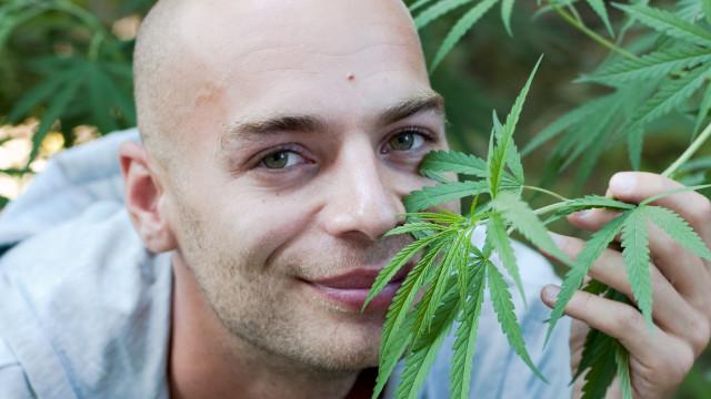 Het effect van cannabis op sperma