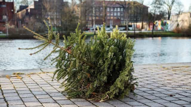 Moet je je kerstboom laten staan tot 6 januari?
