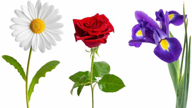 À chaque fleur son occasion