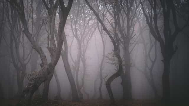 Friday the 13th: Inside the world's most haunted forest