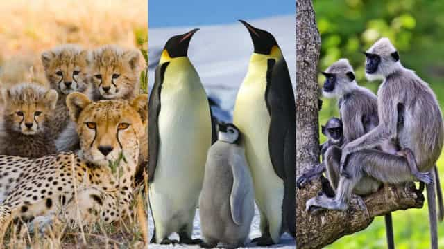 Adorable baby animals pictured with their families