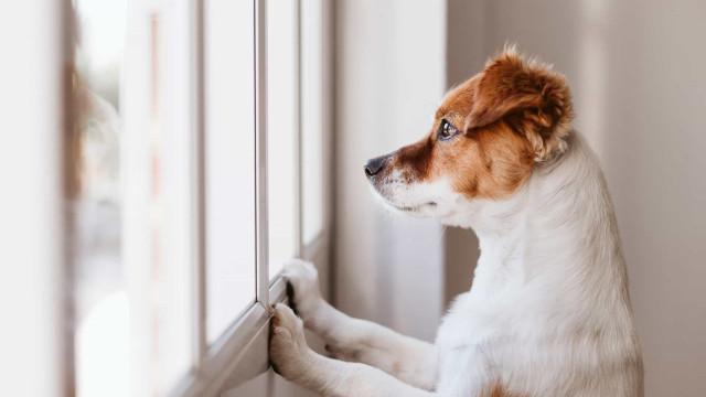 Zo lang kan je hond echt alleen thuis zijn
