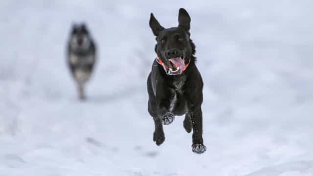 Too cold outside to play? Not for these good doggies!