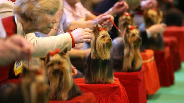 Crufts: The world's greatest dog show