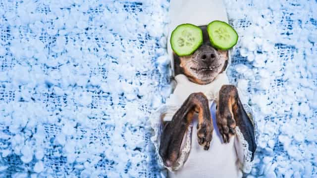 These pampered pets will put a smile on your face