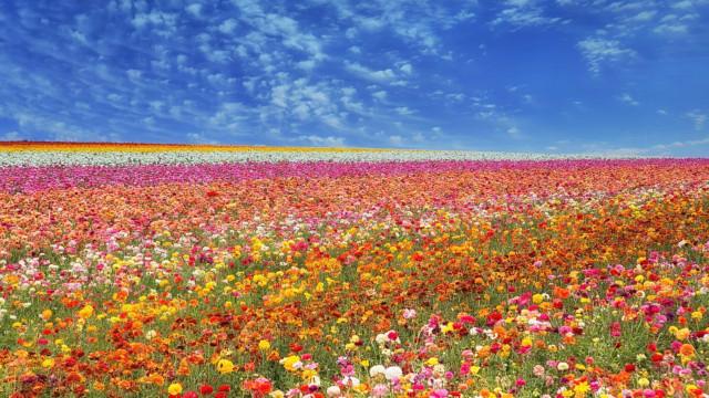 Blomsterlandskap som ser ut som malerier