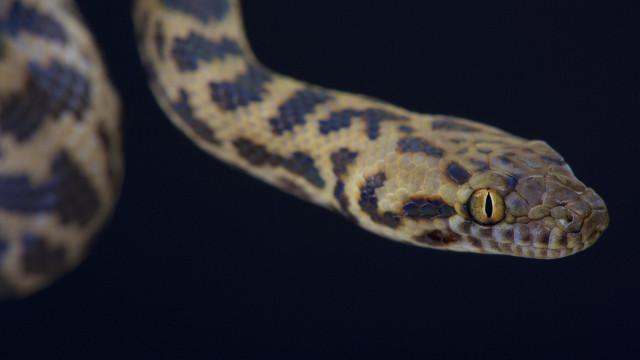 Vrouw vindt na vakantie python haar koffer