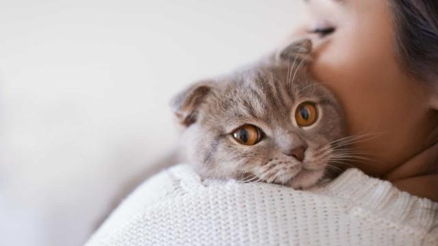 Zo win je het vertrouwen van een kat