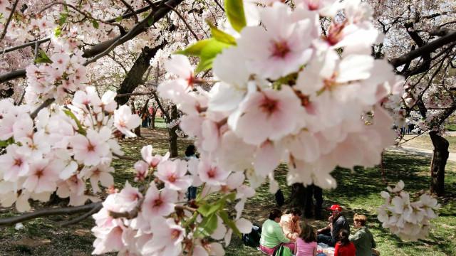 Skjønnheten til våren over hele verden
