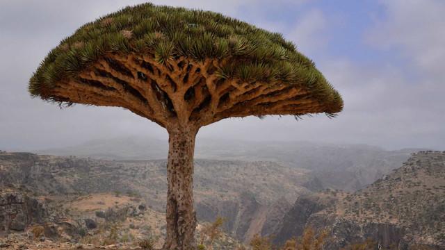 Socotra—an unworldly island in the Arabian Sea