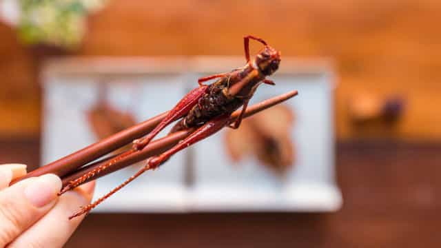 The fascinating reason you should be eating more insects