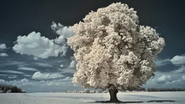 Den drømmeagtige verden i nær infrarød