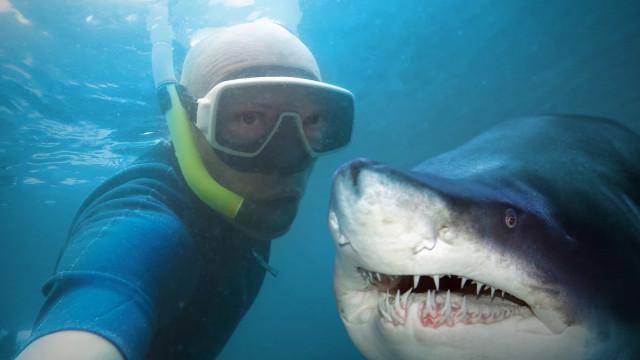 The web's best animal selfies