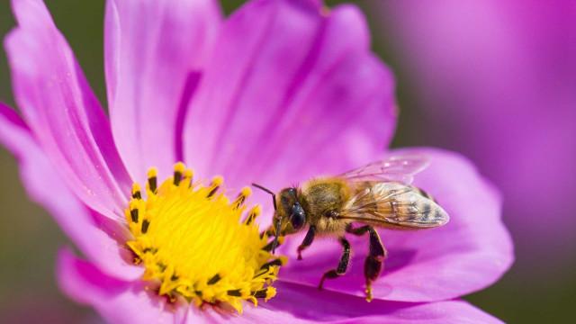Enkle og kreative tips for å hjelpe biene i sommer