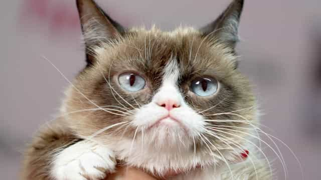 RIP Grumpy Cat: Relive her funniest memes