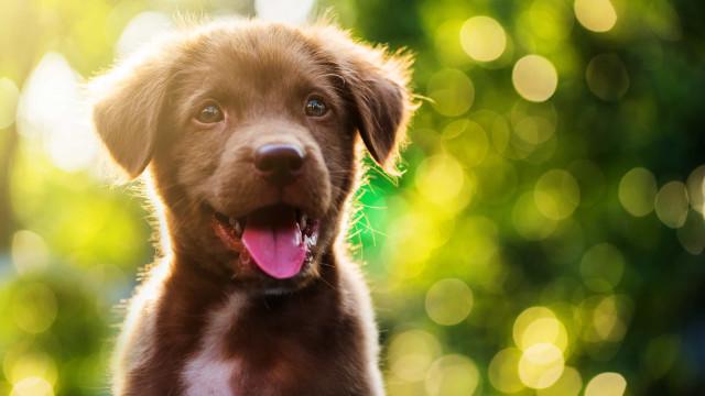 101 unike navn til hunden din