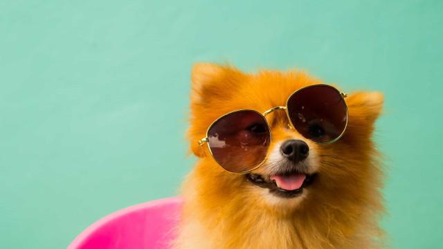 Zo kun je je hond beschermen tegen huidkanker